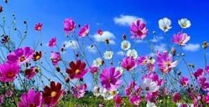 tempo-primavera